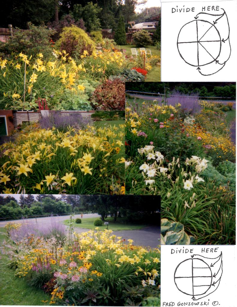 DAYLILIES…Planting, Dividing, And Maintenance