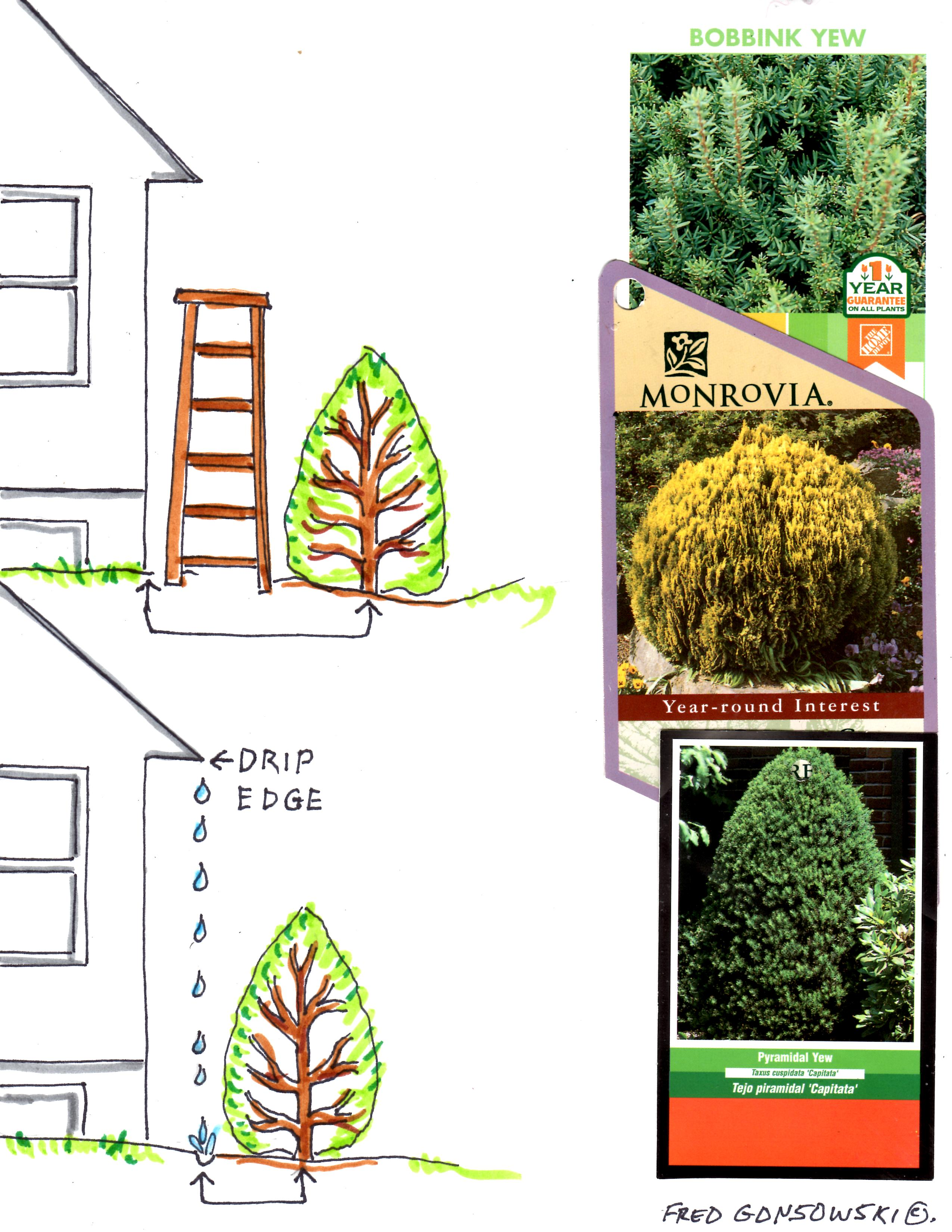 Distance foundation plants from your house when planting fred gonsowski garden home - Plants for the house ...