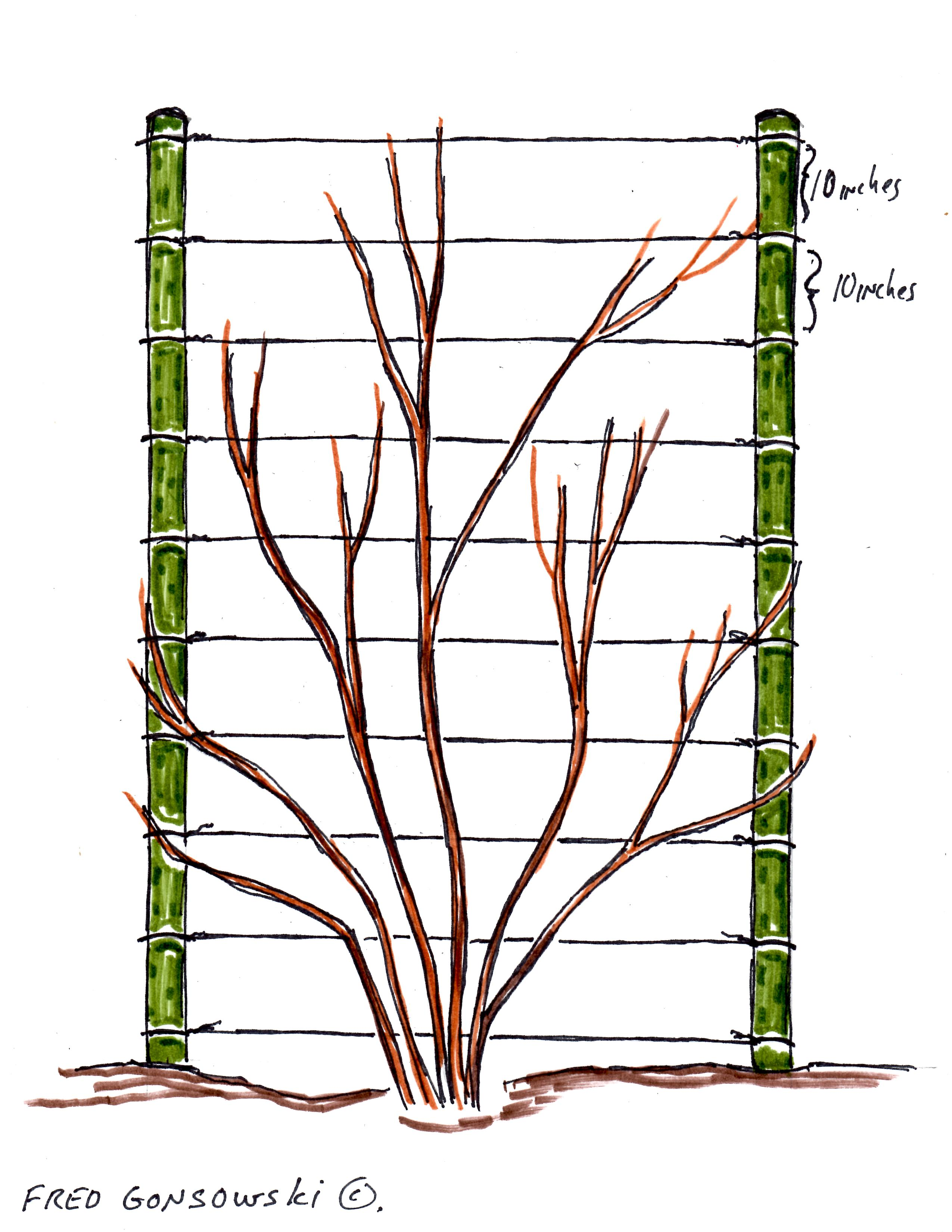 Superb Clematis Trellis Ideas Part - 11: An Easy To Make Trellis For Climbing Vines