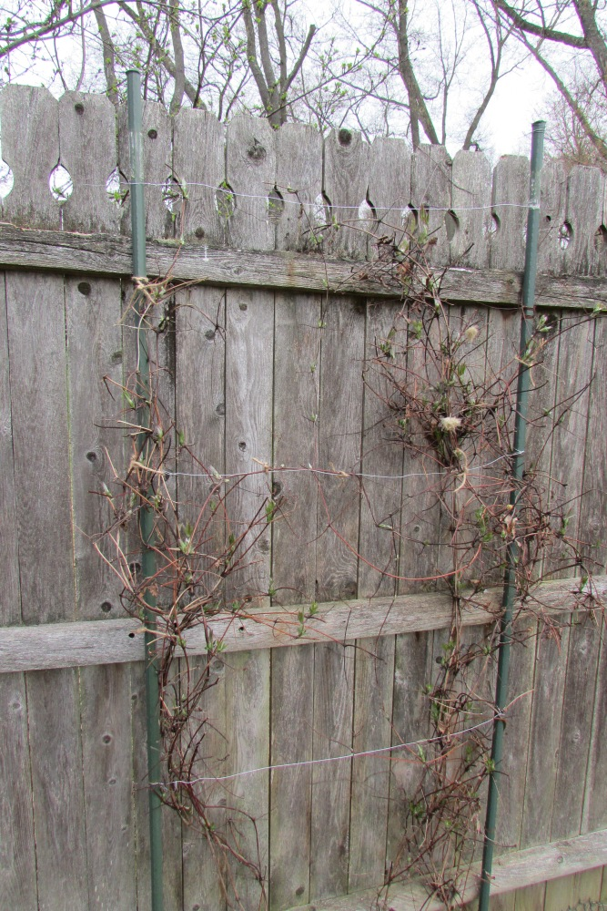 An Easy to Make and Inexpensive Trellis for Clematis, Morning Glories and other Vines (2/4)