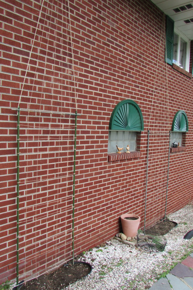 An Easy to Make and Inexpensive Trellis for Clematis, Morning Glories and other Vines (4/4)