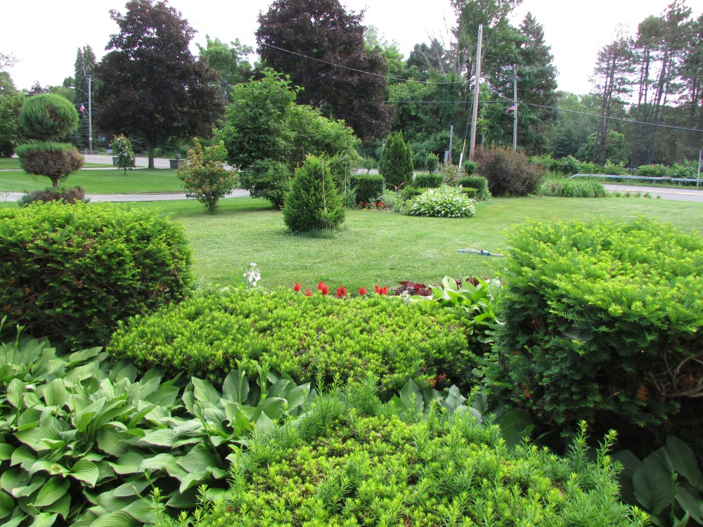 A Look at My Garden here at Whimsey Hill House (June 2014) (5/6)