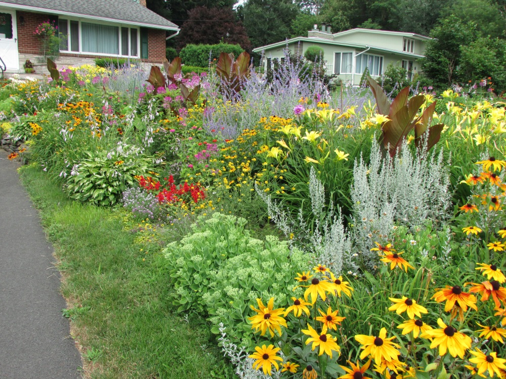 Some Photos to share, on a Cold Winter's day, of My garden in July (5/6)