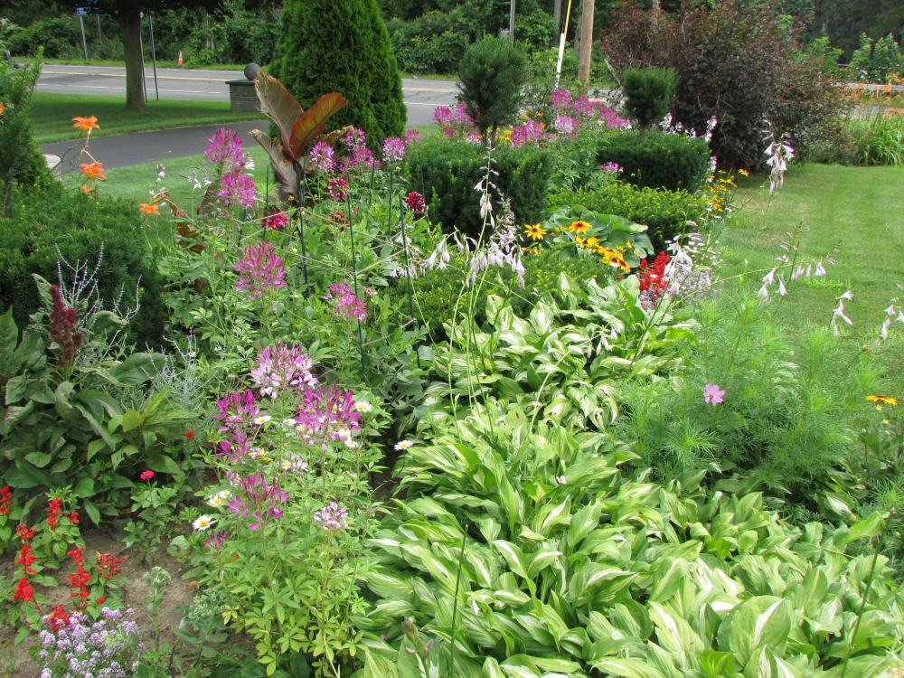 Some Photos to share, on a Cold Winter's day, of My garden in July (6/6)
