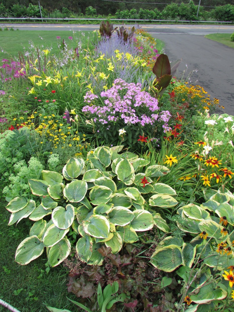 Some Photos to share, on a Cold Winter's day, of My garden in July (2/6)