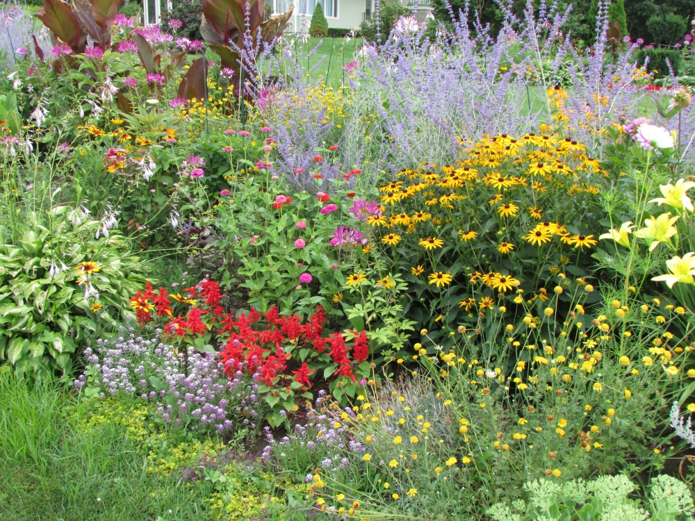 Some Photos to share, on a Cold Winter's day, of My garden in July (4/6)