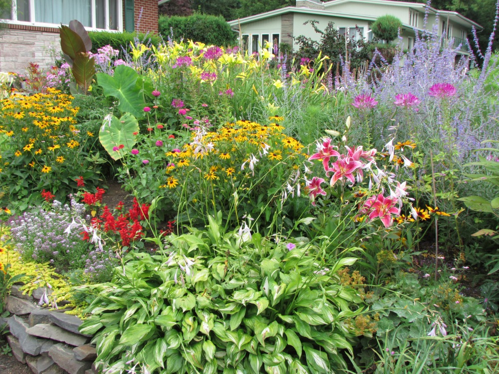 Some Photos to share, on a Cold Winter's day, of My garden in July (3/6)