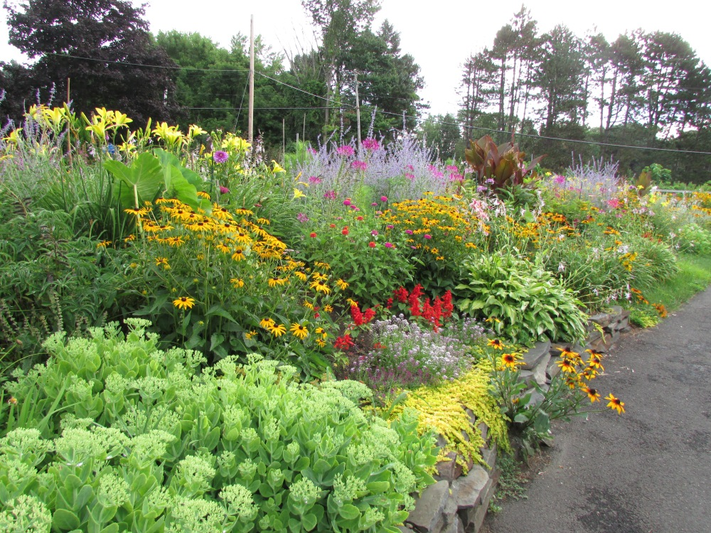Some Photos to share, on a Cold Winter's day, of My garden in July (1/6)
