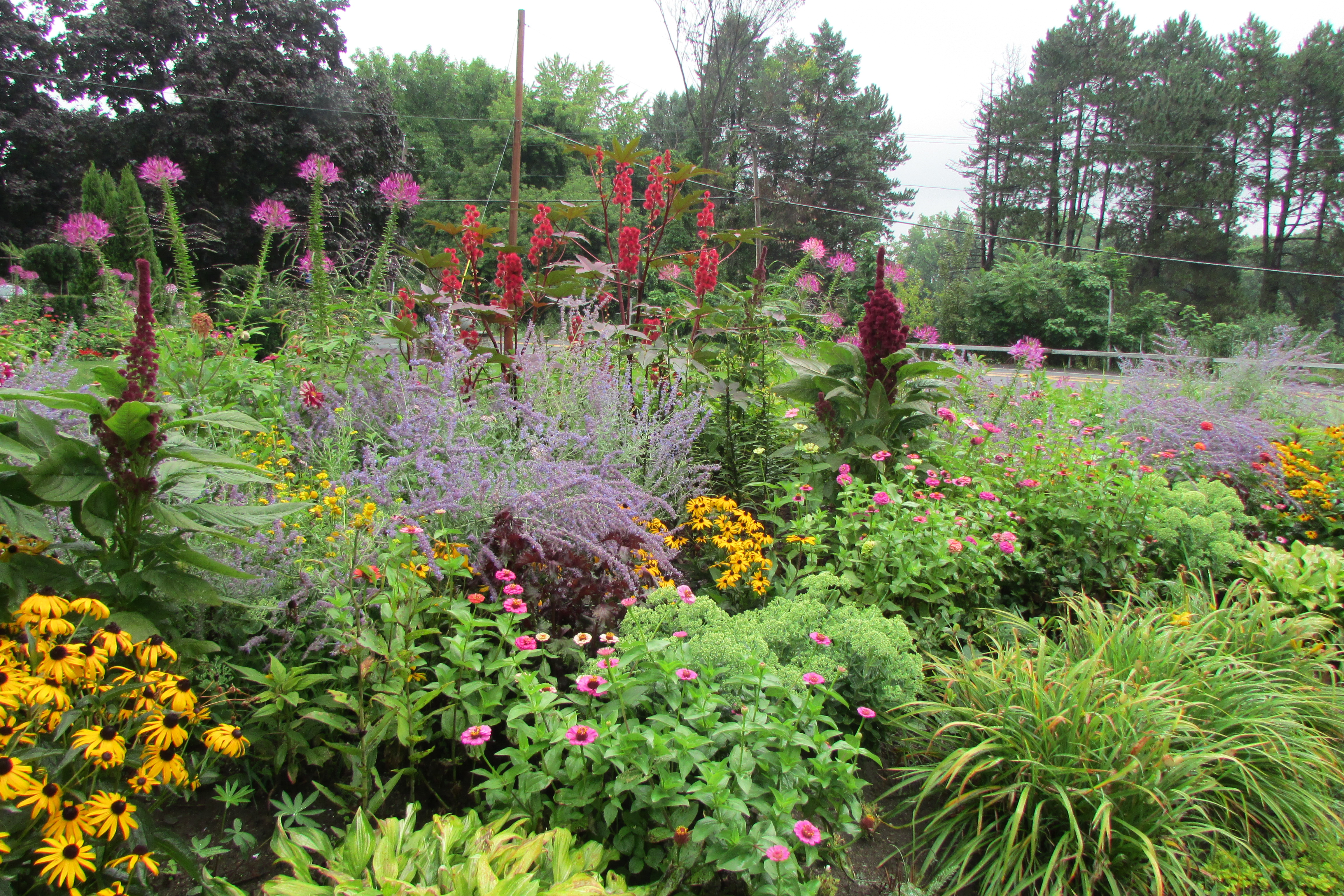 16 What To Plant In My Garden Decor23